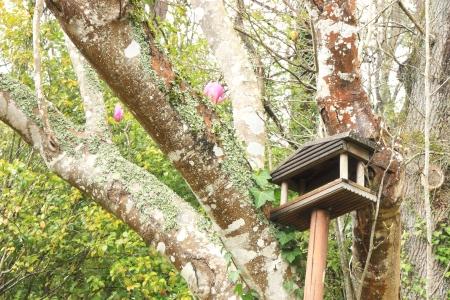 Bird home on tree photo