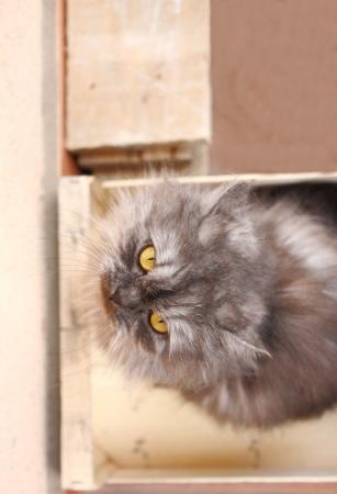 housepet: Cat in the box Stock Photo