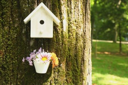 maison oiseau: Maison et de fleurs d'oiseau