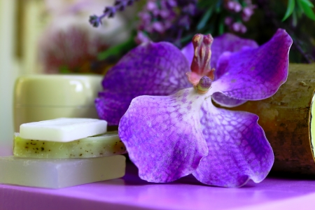 relaxant: Purple orchid Stock Photo