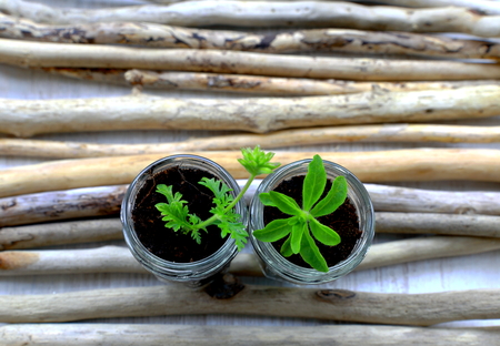herbage: Jars with herbage plant Stock Photo