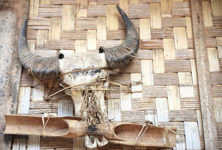 Hanging horns-Laos