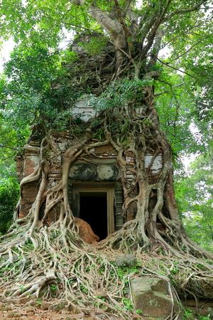 tree-koh ker-cambodia II Stock Photo