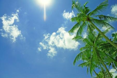 青い空と緑豊かなヤシの木