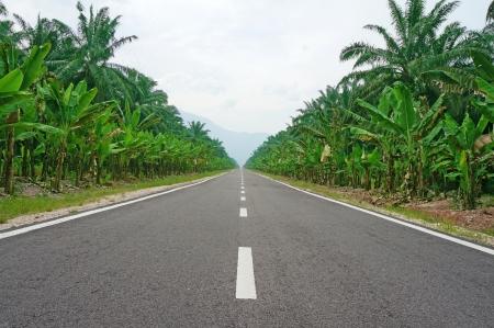ヤシの木の並木道