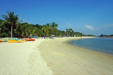 カヌーや日当たりの良いセントーサのビーチでヤシの木 写真素材