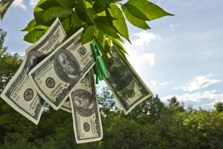 Dollar currency hanging on green tree leafs   Imagens