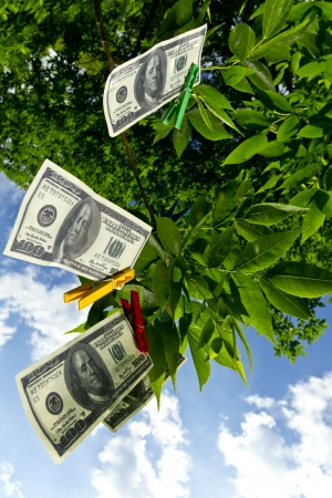 Dollar currency hanging on a green tree