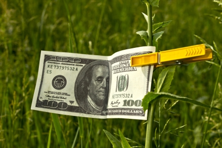 one hundred dollars: One hundred dollars fixed on a sprout with a clothespeg