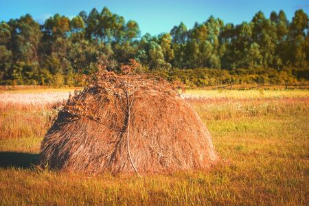 A haystack in late autumn. Field of agricultural land. Blue sky. Toned. Фото со стока