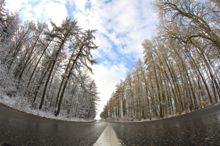 street through the forest