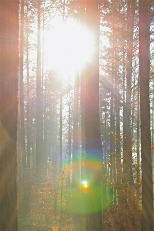 trees in the sunlight on a foggy september morning Banco de Imagens - 17481101