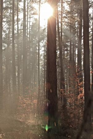 trees in the sunlight on a foggy september morning Banco de Imagens - 17481105
