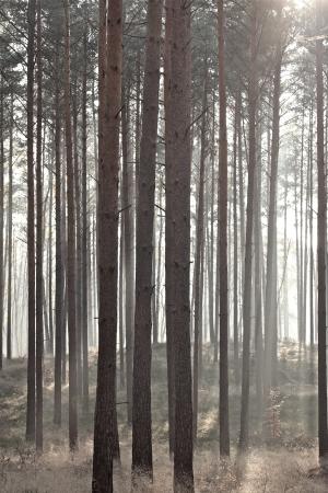 B�ume im Sonnenlicht an einem nebligen Morgen im September
