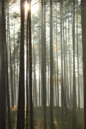 trees in the sunlight on a foggy september morning Banco de Imagens - 17481098