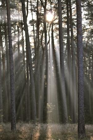 trees in the sunlight on a foggy september morning Banco de Imagens - 17481102