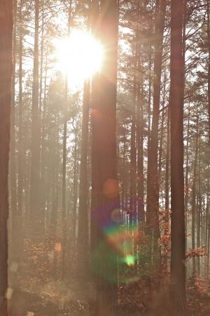 trees in the sunlight on a foggy september morning Banco de Imagens - 17481106