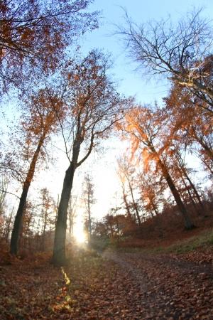 trees in the sunlight on a foggy september morning Banco de Imagens - 17481198