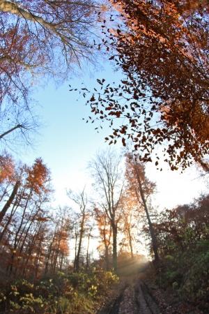 trees in the sunlight on a foggy september morning Banco de Imagens - 17481182
