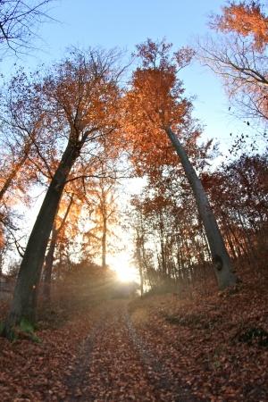 trees in the sunlight on a foggy september morning Banco de Imagens - 17481188
