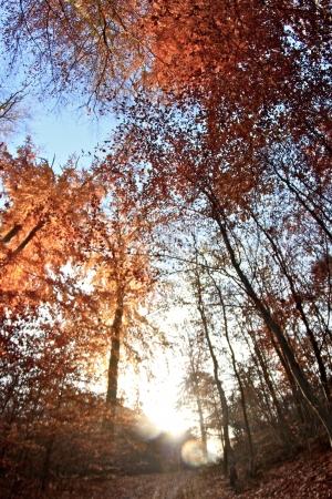 trees in the sunlight on a foggy september morning Banco de Imagens - 17481107