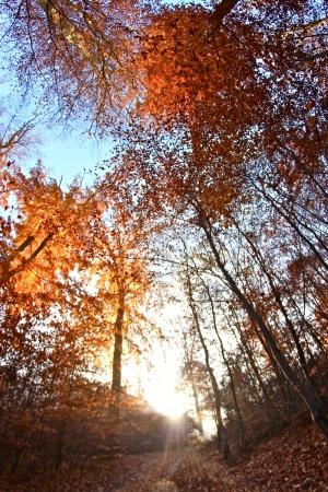 trees in the sunlight on a foggy september morning
