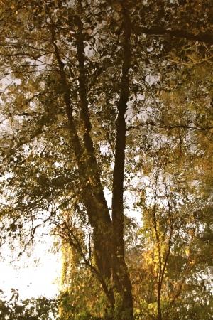 a lake on a foggy autumn morning Banco de Imagens - 17517994