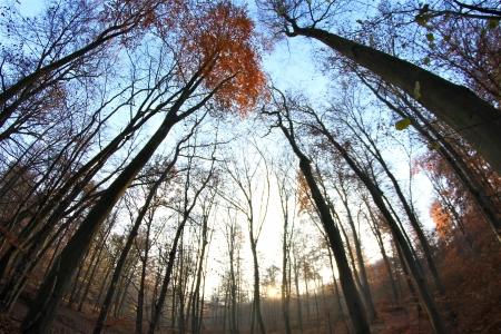 trees on a foggy autumn morning Banco de Imagens - 17517987