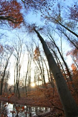 trees on a foggy autumn morning Banco de Imagens - 17517998