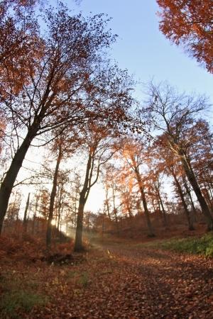 trees on a foggy autumn morning Banco de Imagens - 17517999