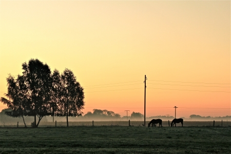 autumn landscape on a foggy morning