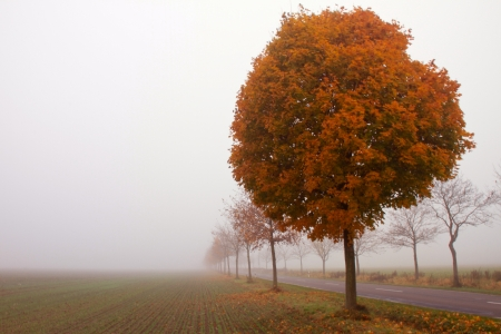 trees on a foggy autumn morning Banco de Imagens - 17518032