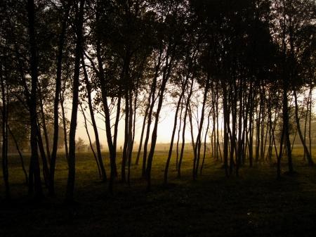 trees on a foggy autumn morning