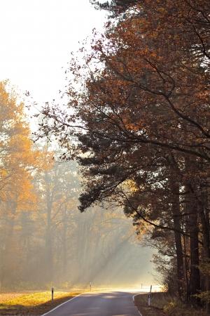 a street on a foggy autumn morning Banco de Imagens - 17517996
