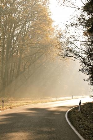 a street on a foggy autumn morning Banco de Imagens - 17518001