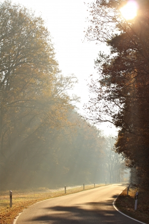 a street on a foggy autumn morning