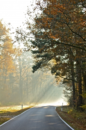 a street on a foggy autumn morning Banco de Imagens - 17517997
