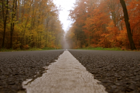 a street on a foggy autumn morning
