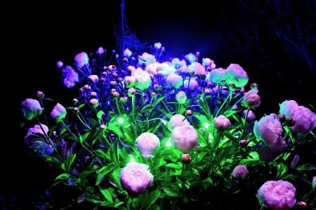 Rosen in einer Licht-Show