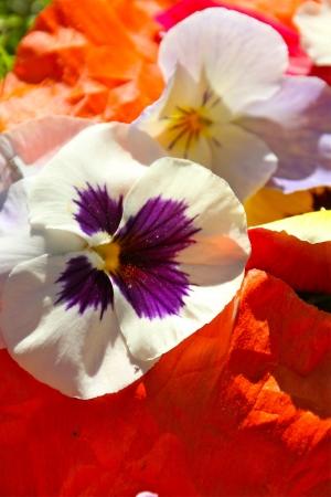 una flor en el sol del verano