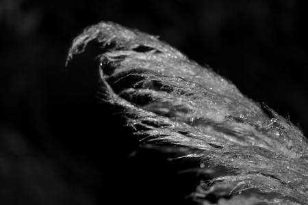 lonely plant im Winter
