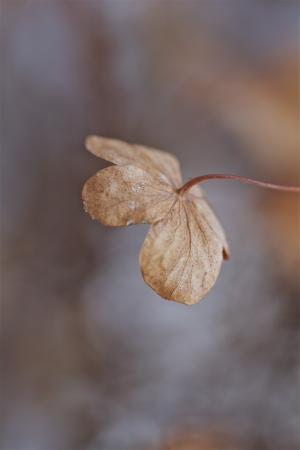eine alte, arme, einsame Pflanze auf einem kalten Wintertag Lizenzfreie Bilder