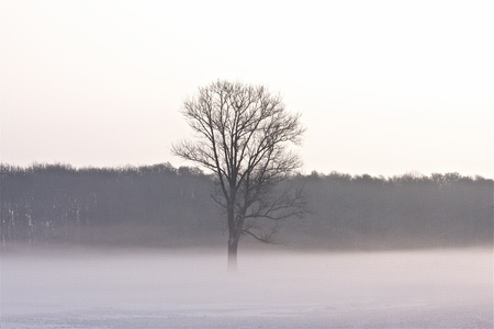 a winter landscape on a foggy december morning photo