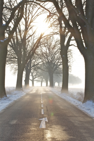a winter landscape on a foggy december morning Stock Photo