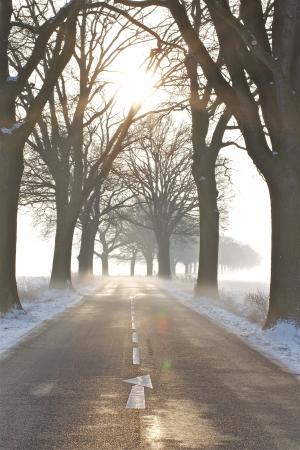 eine Winterlandschaft an einem nebligen Morgen im Dezember Lizenzfreie Bilder
