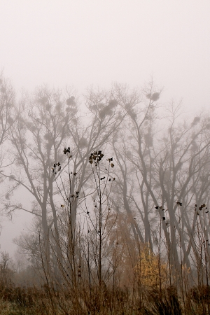 a landscape on a foggy october morning