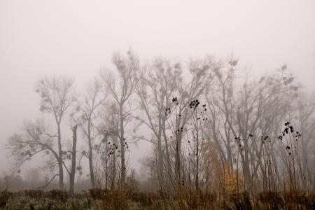 eine Landschaft an einem nebligen Morgen im Oktober
