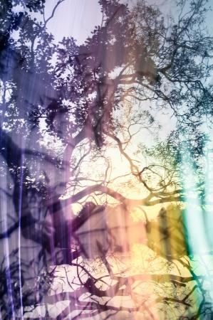 crazy light show meets photography of landscape