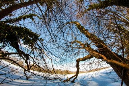 einige B�ume in der Wintersonne auf einem See