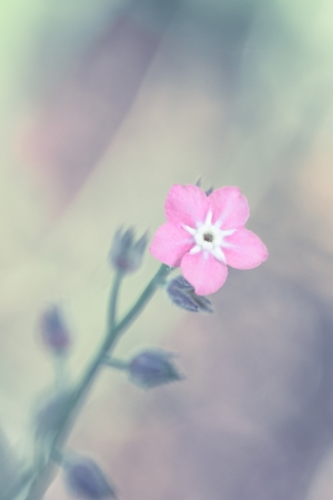 una flor en el sol de la ma�ana